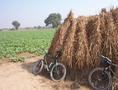 #8: Parking our bikes on the haystack at the confluence site