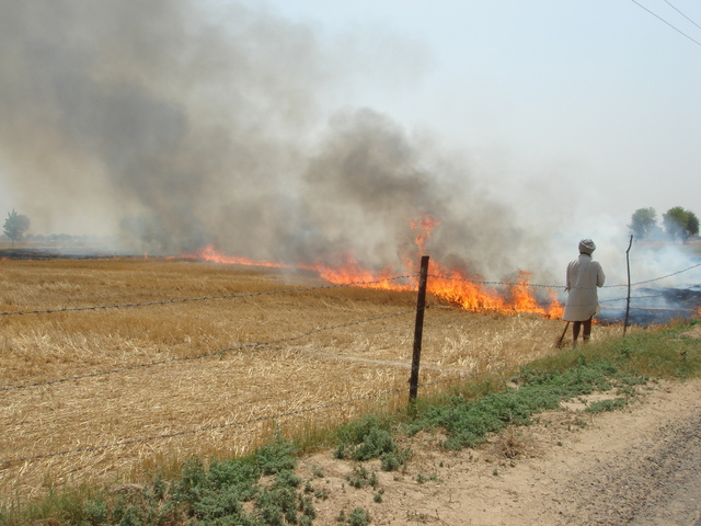 Slash-and-burn farming near the confluence