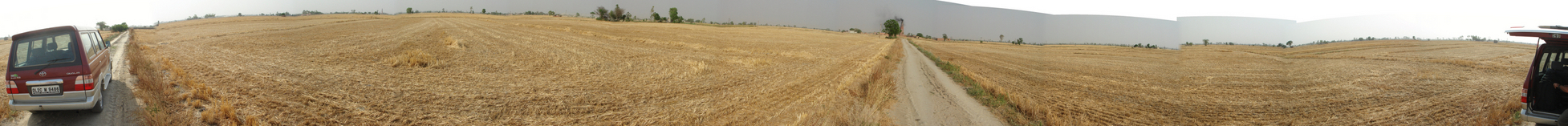 Panoramic view of the wheat fields
