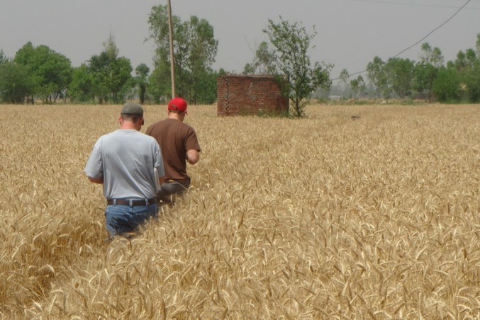 Doug and Sam walking through the wheat