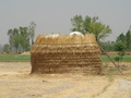 #5: Haystack in the field near the CP