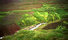 #7: neon-green mosses around the confluence