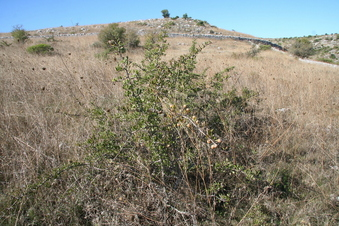 #1: The bush at the confluence
