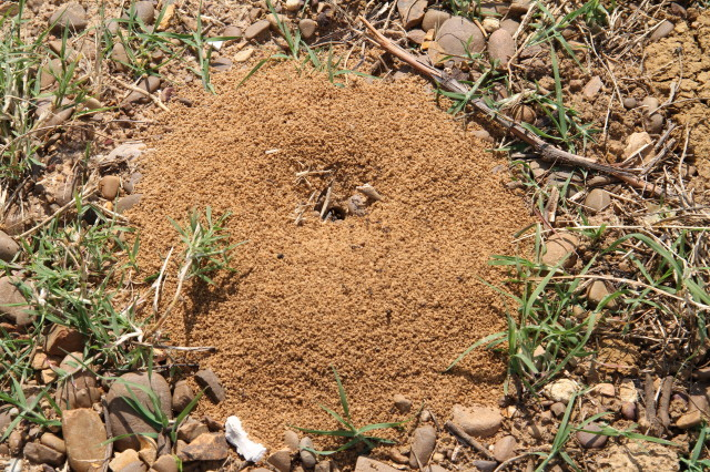 Ant mound, a few metres from the CP