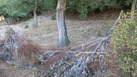 #8: Harvested cork oak with fence in front