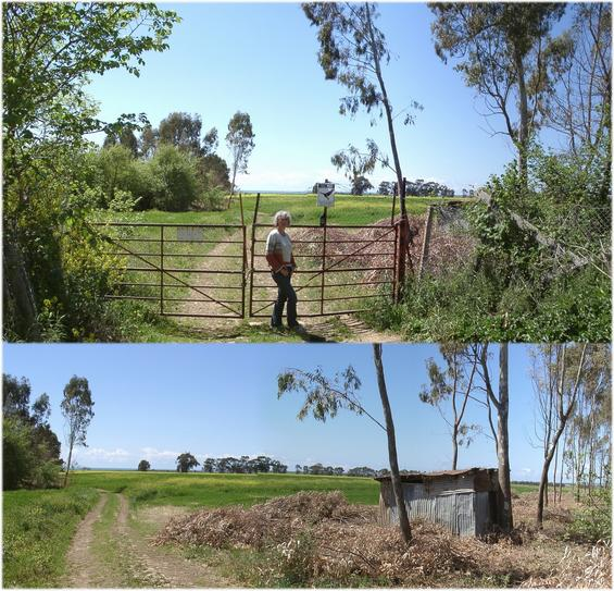 Locked gate & view from eastern corner of rape field