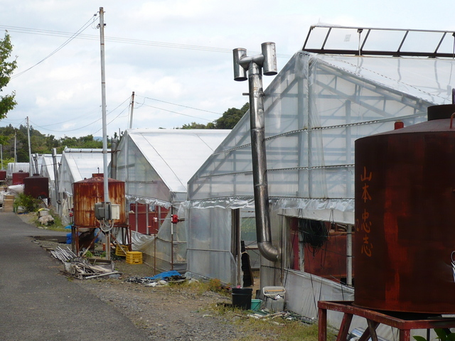 The plastic greenhouses near the confluence