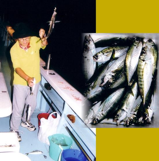 Horse mackerel fishing