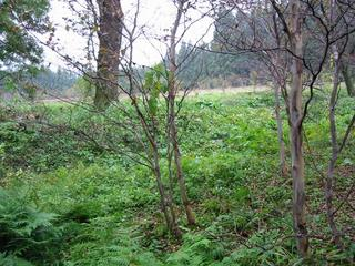 #1: A thicket or crop field where the confluence is in