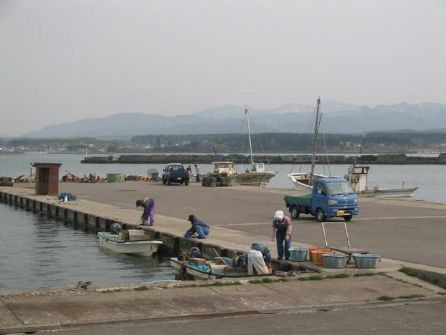 Hiranai harbor; manager w/ blue Toyota talks to boatman in distance to no avail