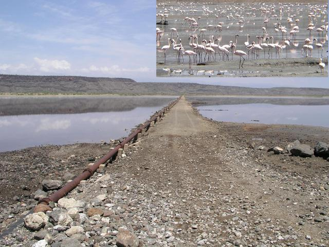 Those adventurous enough to brave the second Lake Magadi causeway and the steep rocky road beyond are rewarded with a seeing plethora of flamingos