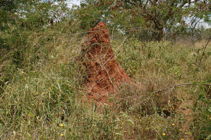 View North - Termite mound