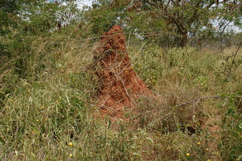 #1: View North - Termite mound