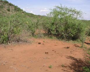 #1: 3S 38E is located near Intersection 36 in Tsavo West NP.