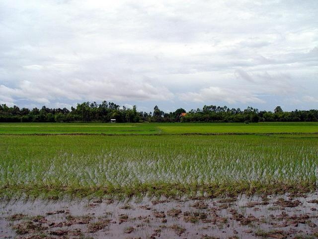 Paddy fields (south) with confluence (20m)