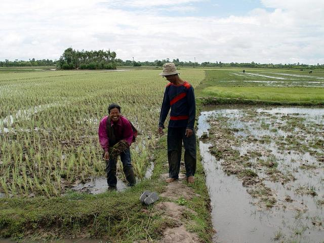 Finally paddy fields (east) with farmers