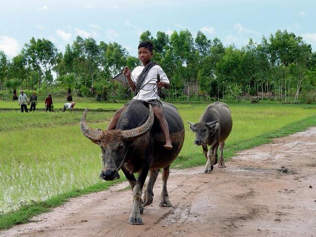 Transportation in Cambodia