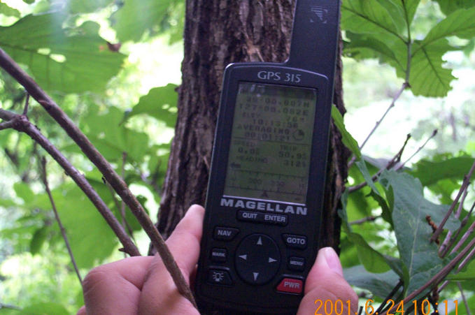 Fixing the GPS on a tree; the coordinates are visible.