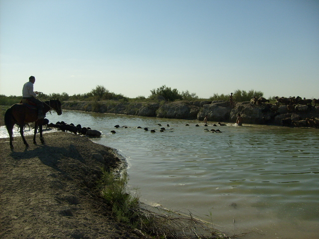 Some Kazakhs are crossing the river with their sheep (7km from the confluence)
