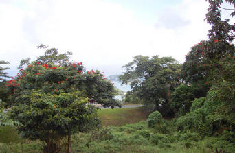 #1: Looking NE towards the coast and Castries. The confluence is a few yards in front of the camera, down the slope.