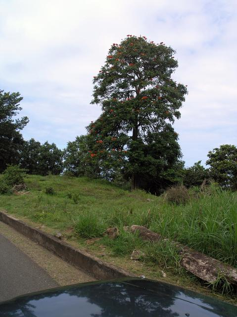 Recognizable tree