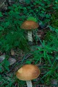 #9: Fungus growing near the point