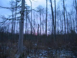 #1: Last picture not too dark