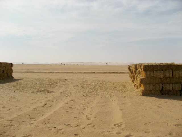 Looking south towards the Murzuq Sand Sea