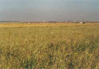 #1: The Confluence 33°N 8°W in the barley field towards NE, marked by a heap of stones