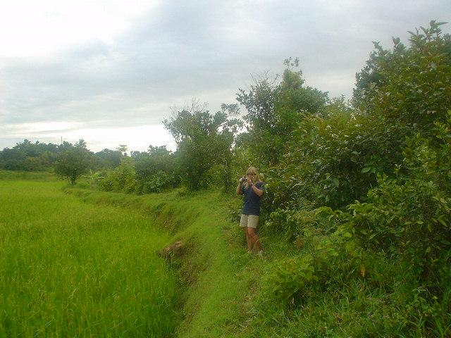 Wendy overlooking a rice paddy