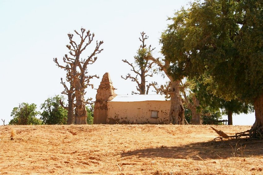 Mosque and baobabs