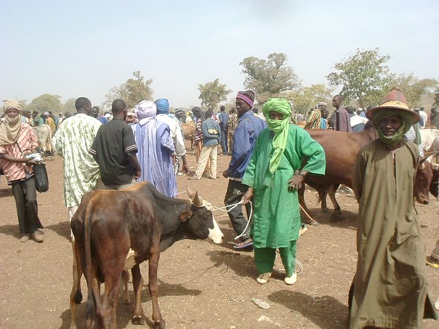 Dealers at Le Drale cattle market near Kati