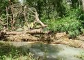 #8: Dead tree across the river