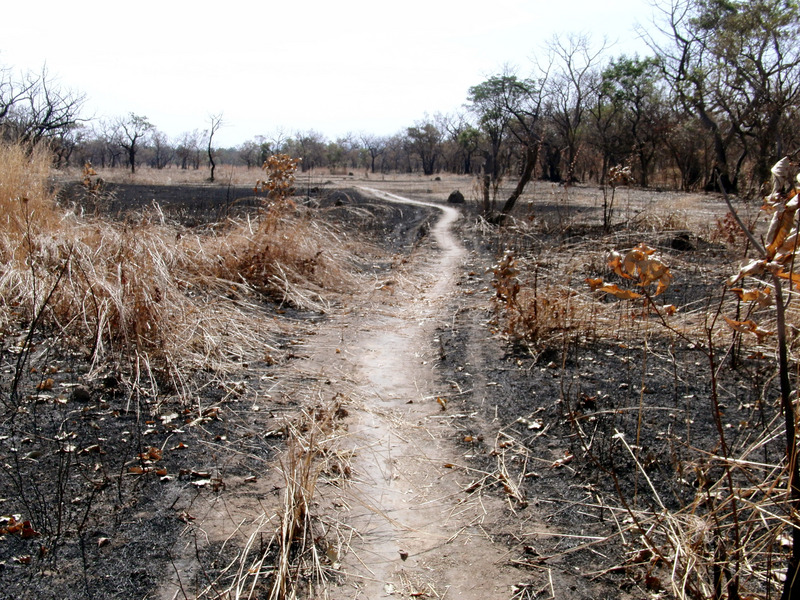 Path through burned shrub forest plain