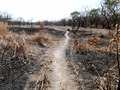 #7: Path through burned shrub forest plain
