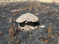 #9: Termite hill at the burned shrub forest plain