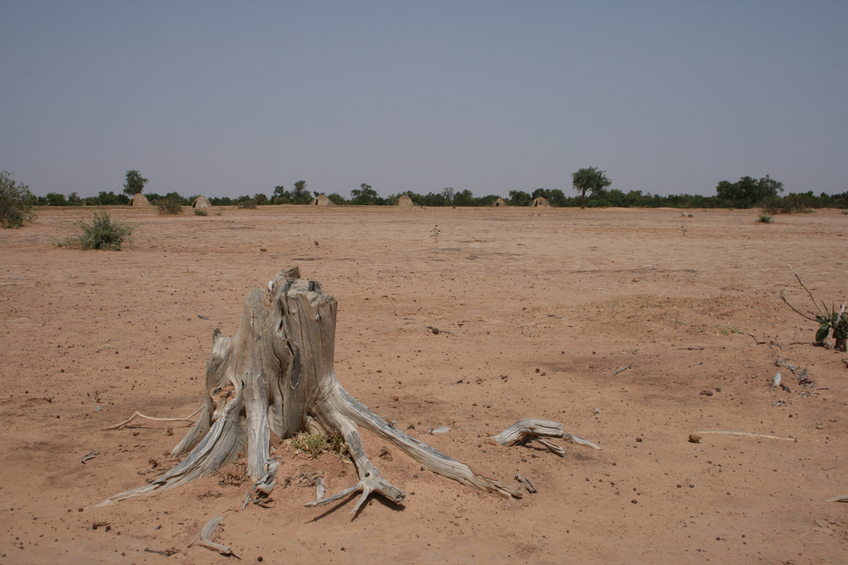 Sabkha plain outside the bush