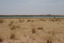 #8: 2 km south: Niger River banks