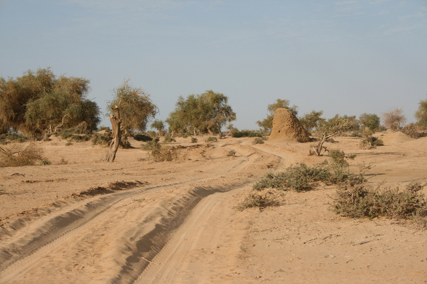 Track along the Niger River