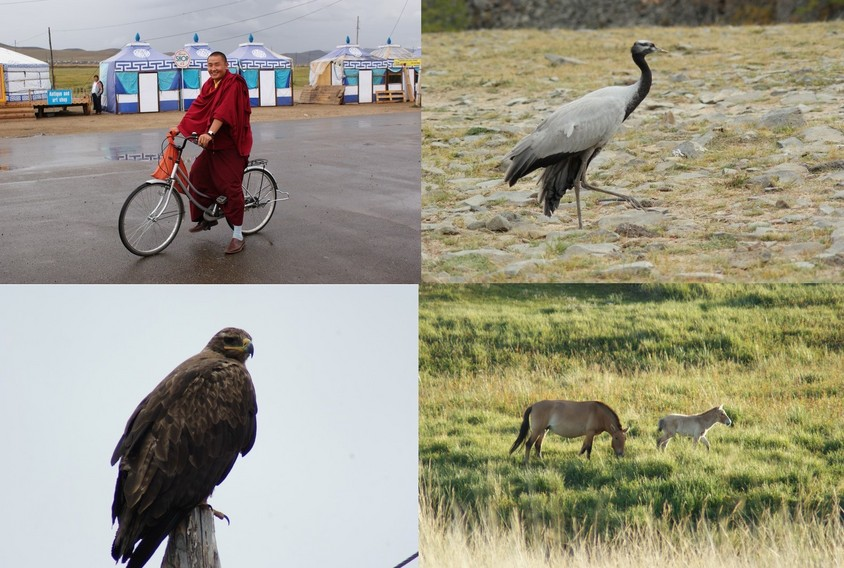 The people, birds, mammal in Mongolia