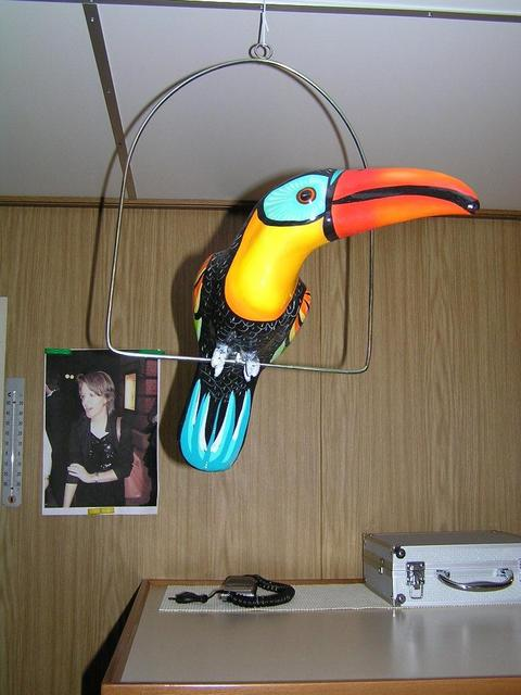 A toucan, typical for Mexico's fauna