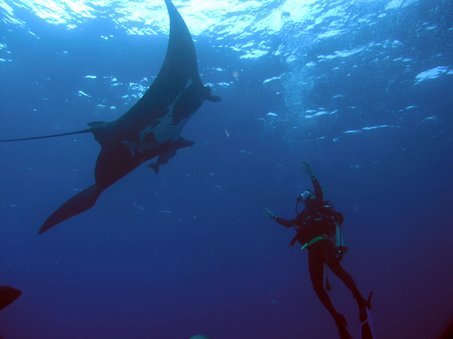 Visiting with a Manta