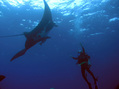 #3: Visiting with a Manta