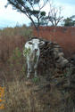 #2: Wild Mexican Attacking Cow