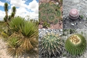 #8: Vegetation in the area