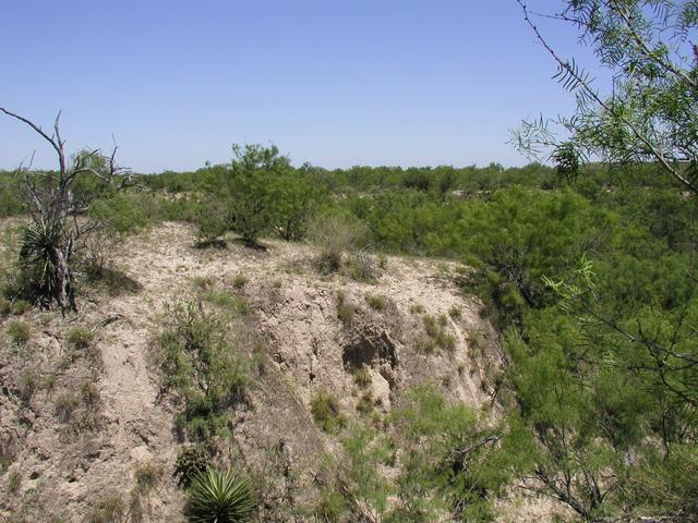 A view of the convergence point from the other side of the arroyo.  The point is on the edge of the dropoff, between the darkly colored area of the arroyo wall and the bushes on top.