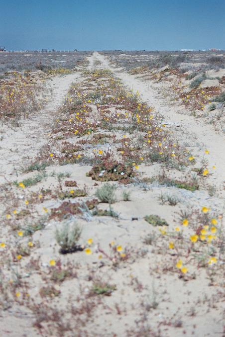 Road with desert flowers close to confluence