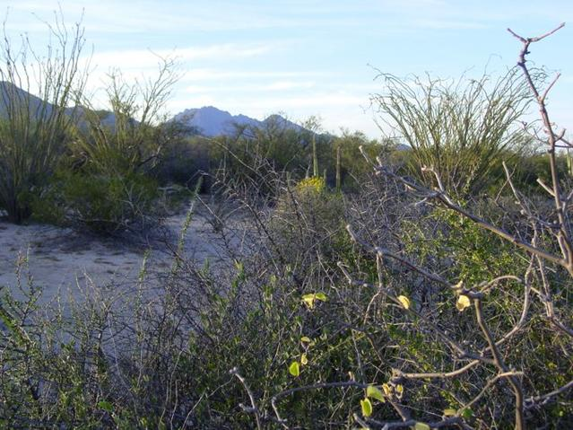 Looking North from the confluence. Note the ocotillos and paloverdes in the background