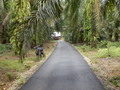 #9: Road 100 m from the Confluence