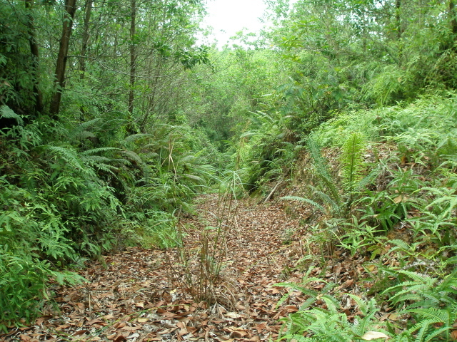 A general view along the unused overgrown logging trail